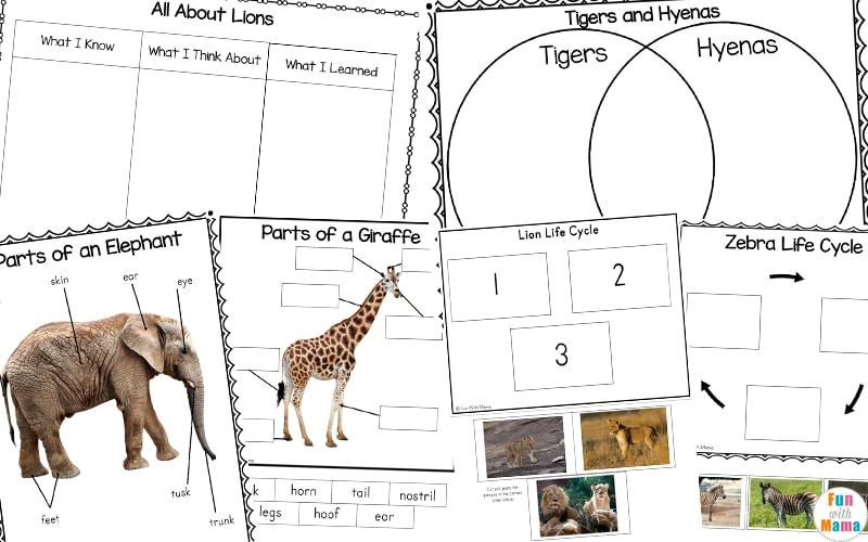 Zoo Animals Life Cycle + Animal Study